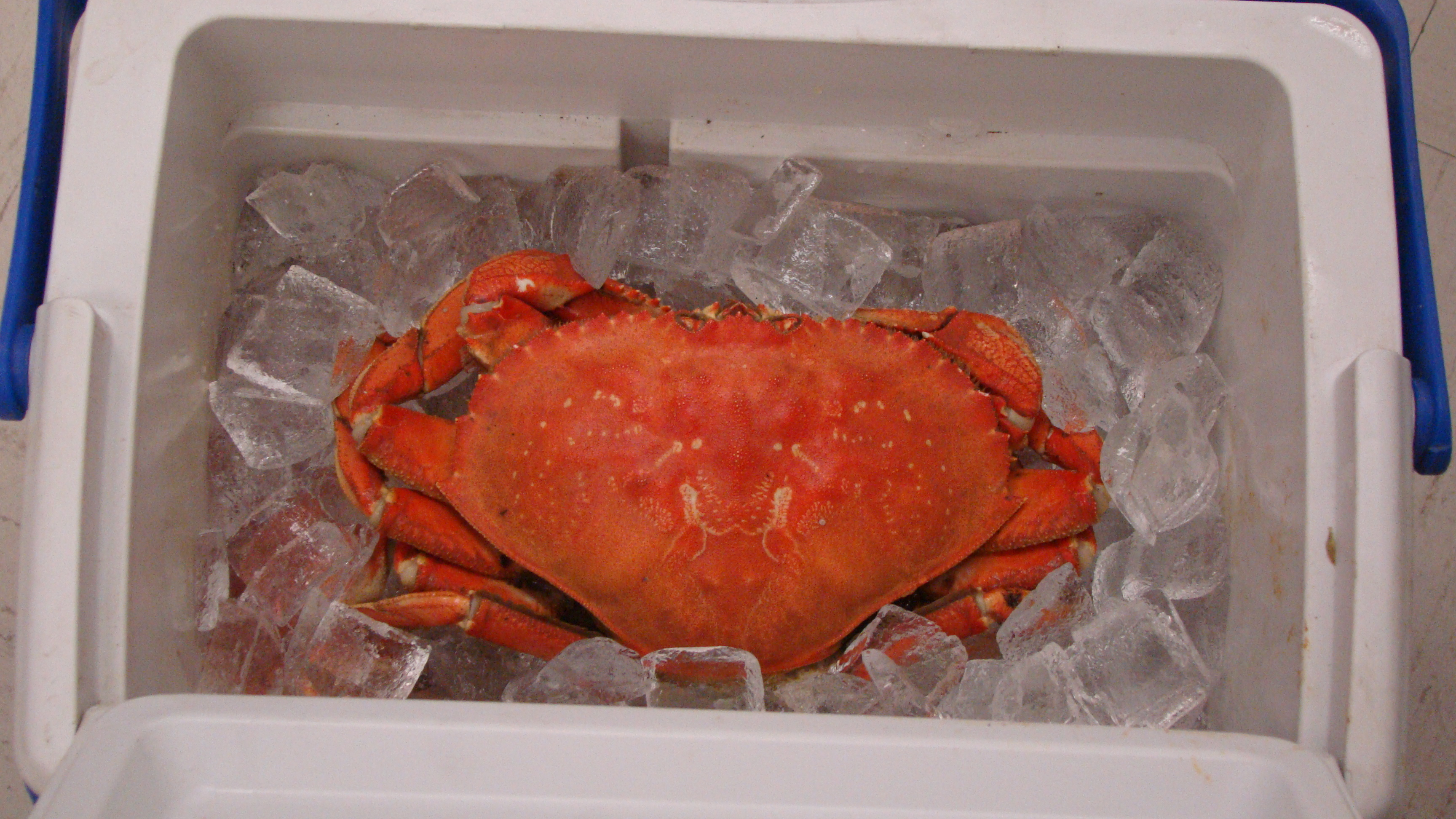 special raffle prize-fresh crab